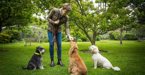 South London Dog Trainer